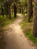 Путь через пальмы в парке стоковое изображение