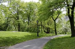 Путь через парк стоковое изображение rf