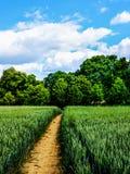 Путь через пшеничное поле Стоковое Фото