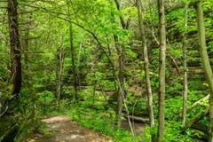 Путь через древесины Стоковое Фото