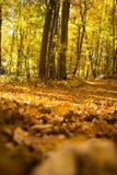 Путь через древесины Стоковая Фотография