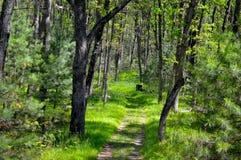 Путь через древесины Стоковое Изображение RF