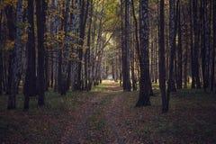 Путь через древесины стоковые фотографии rf