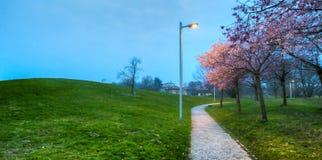 Сад III цветения вишни Стоковое Фото