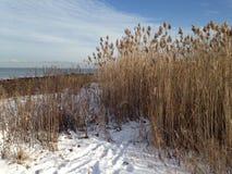 Путь через снежок Стоковые Фотографии RF