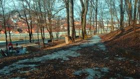 Путь через сосновый лес стоковые фото