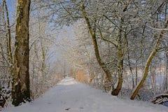 Путь через тоннель обнаженных деревьев зимы, предусматриванный в снеге стоковое изображение rf
