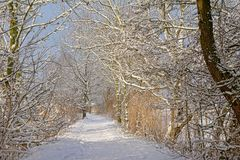 Путь через тоннель обнаженных деревьев зимы, предусматриванный в снеге стоковые фото