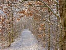 Путь через тоннель обнаженных деревьев и кустарников зимы, предусматриванный в снеге стоковая фотография