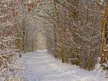 Путь через тоннель обнаженных деревьев и кустарников зимы, предусматриванный в снеге стоковые фотографии rf