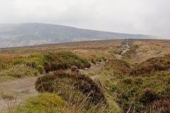 Путь через туманные горы Ticknock с вереском стоковое фото