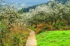 Путь через Blossoming сад Стоковые Фотографии RF