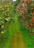 путь яблока Стоковые Изображения RF