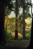 путь японца сада Стоковые Изображения