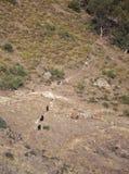 Путь для скотин Стоковое Изображение