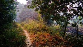 Путь стоковое фото