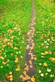 Путь Стоковое Изображение RF