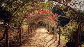 Путь Стоковые Фото