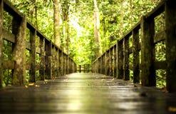 Путь Стоковые Изображения