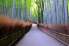 Путь Arashiyama бамбуковый, Япония Стоковое фото RF