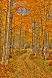 Путь Aspen Стоковые Изображения