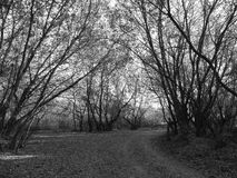 Путь B&w Стоковые Фото