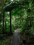 Путь El Yunque Стоковое Изображение RF