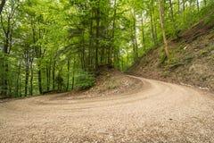 Путь Forrest на Uracher Wasserfälle, плохом Urach, Германии Стоковое фото RF