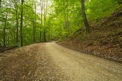 Путь Forrest на Uracher Wasserfälle, плохом Urach, Германии Стоковое Фото