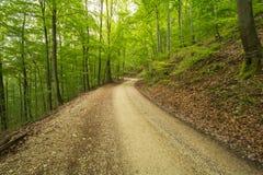 Путь Forrest на Uracher Wasserfälle, плохом Urach, Германии Стоковое Изображение RF