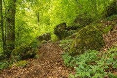 Путь Forrest на Uracher Wasserfälle, плохом Urach, Германии Стоковые Изображения RF
