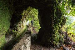 Путь levada, Madera стоковое изображение rf