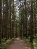 Путь Montain, лес Abetone Стоковые Фото