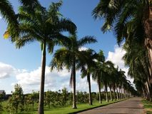 Путь palmtree Стоковое Фото