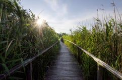 Путь reed стоковое фото