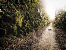 Путь ` s жизни Стоковое Изображение RF