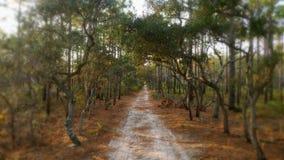 Путь Sandy в древесинах Стоковое Изображение RF