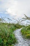 Путь Sandy окруженный высокорослыми травами стоковые фото