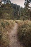 Путь Sandy пеший Стоковые Фото