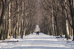 Путь Snowy Горожане в Dendrarium паркуют, Владикавказ, северное Ossetia-Alania, Россия 2014-01-07 Стоковые Изображения RF