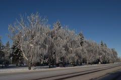 Путь Snowy Стоковое Фото