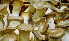 Пухлый свежий дисплей грибов стоковое фото rf