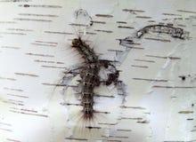 Пушистая гусеница с геометрической картиной стоковое изображение rf
