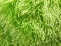 Пушистая зеленая предпосылка Стоковая Фотография RF