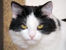 Пушистая домашняя кошка на окне Стоковые Изображения