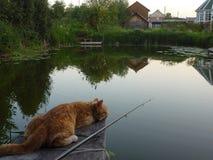 Пушистая рыбная ловля кота Стоковая Фотография RF