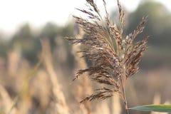 Пушистая сухая ветвь на поле осени стоковое изображение rf