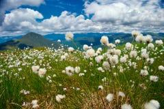 Пушистая трава Стоковая Фотография
