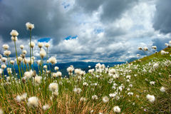 Пушистая трава Стоковое Изображение RF