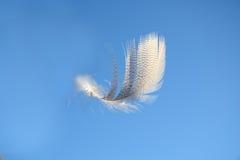 Пушистое мягкое белое striped перо птицы плавая в ветер в ясном голубом небе Стоковая Фотография RF